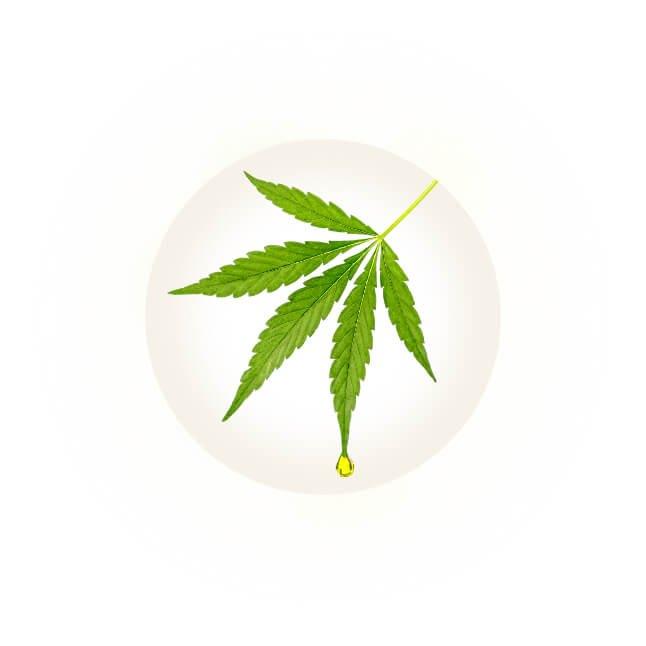 what is cbd infographic